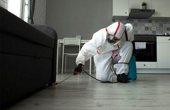 Нежданные гости. Какие насекомые могут завестись дома и как их вытравить?